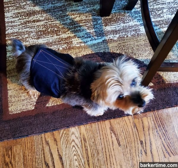 yorkie dog diaper belly band