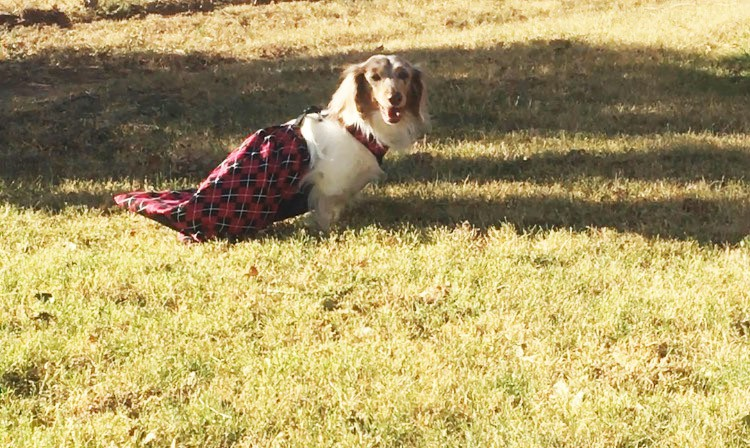 Red Argyle Drag Bag for Paralyzed Dog