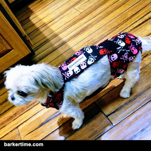 maltese dog diaper