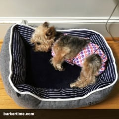 yorkie dog diapers