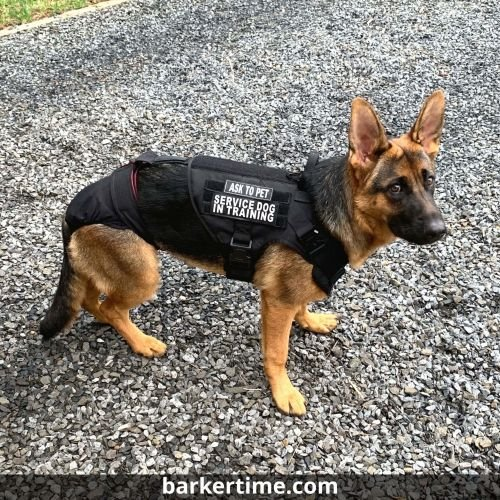 german shepherd dog diaper