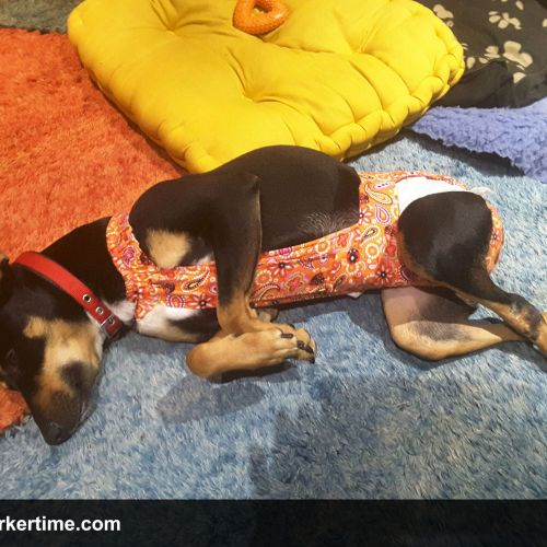 dog diapers that stay on