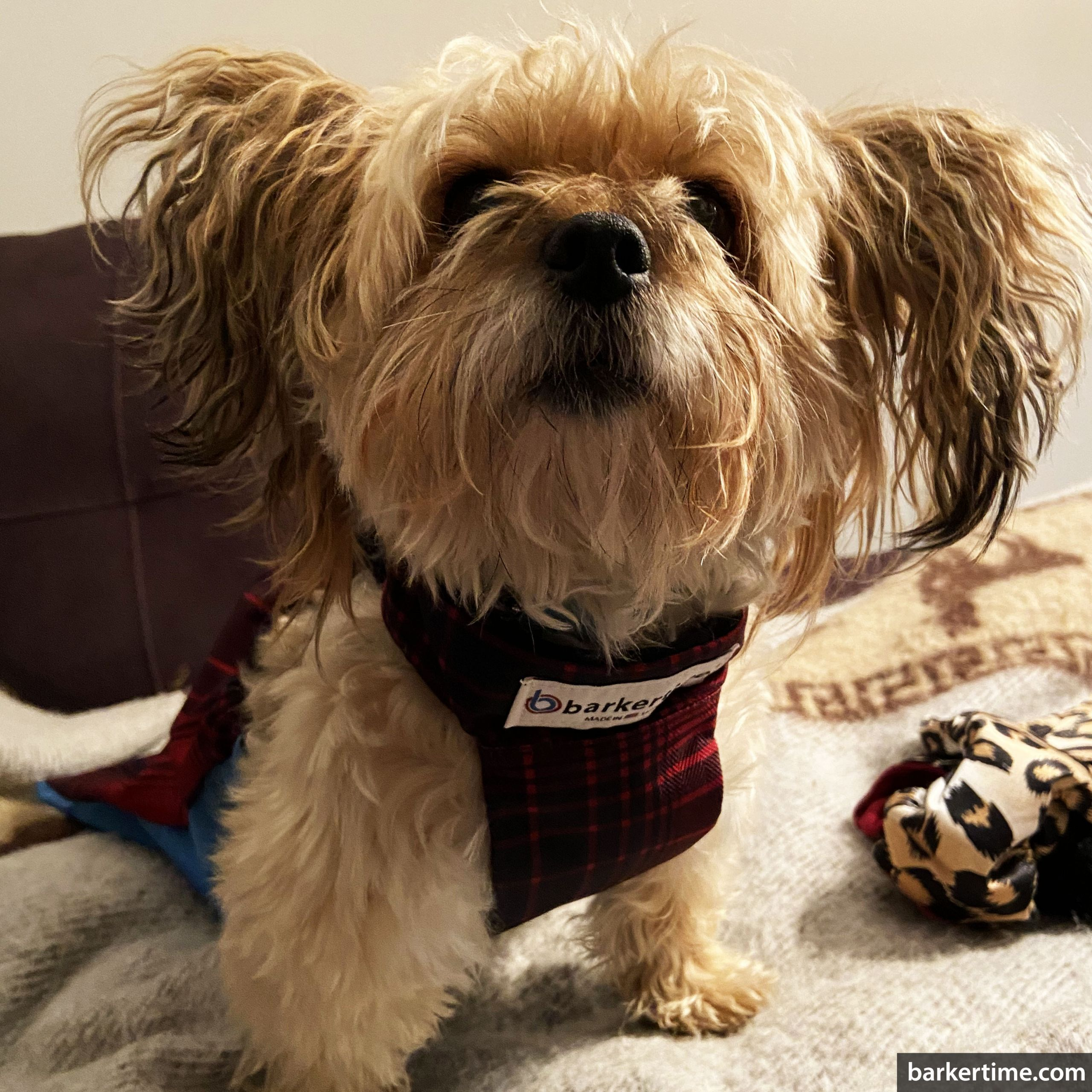 yorkie paralyzed dog drag bag