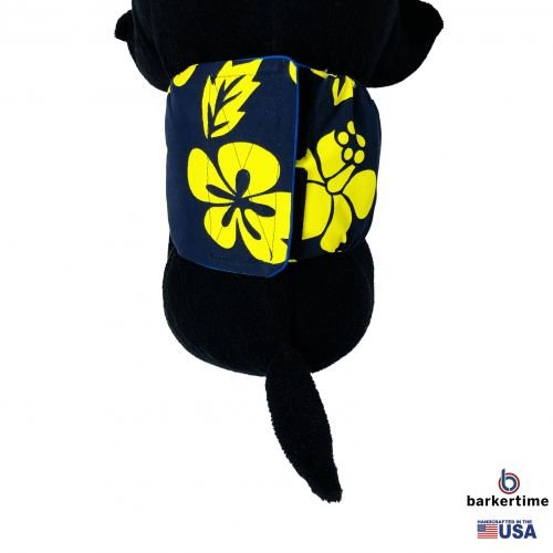 yellow hawaiian hibiscus on blue belly band - model 2